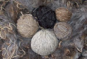 Natural Colors of Navajo Churro Wool